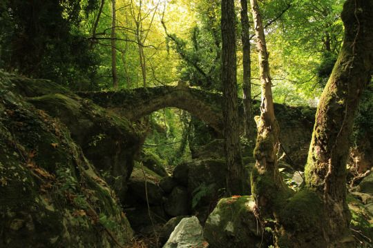 Pilio Tsagarada Old Bridge in the wood_Part 2 by spiros