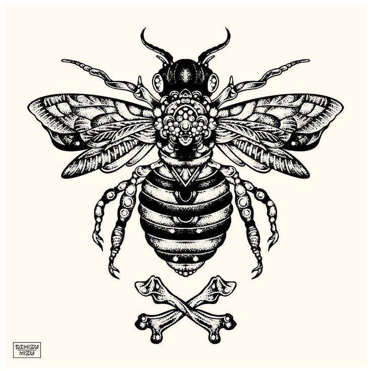 "Drawing ""Mellifera"" - ink on paper.  #schizumizu #insect #bee #black #artistic #graphic #ink #instalike #follow #animal #surreal #print #design #polish #polishillustration #metal #art #drawing #witch #linear #bones #fashion #evil #sketch #perfect..."