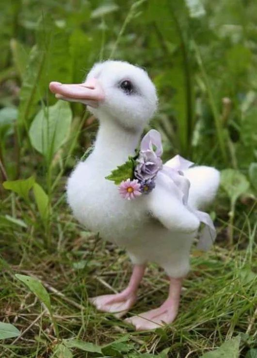 Baby duckling ❣️