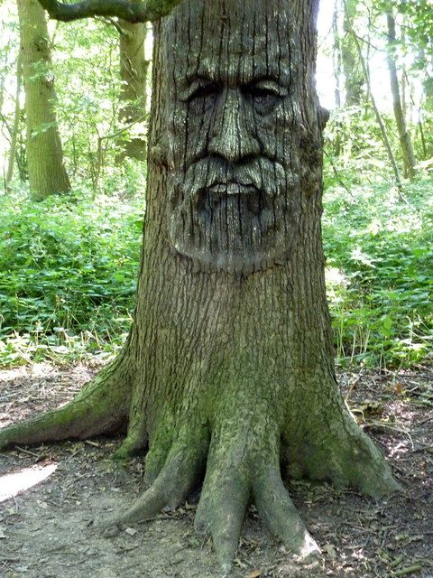 Tree carving in Druidstone Park, Blean Geograph Britain and Ireland