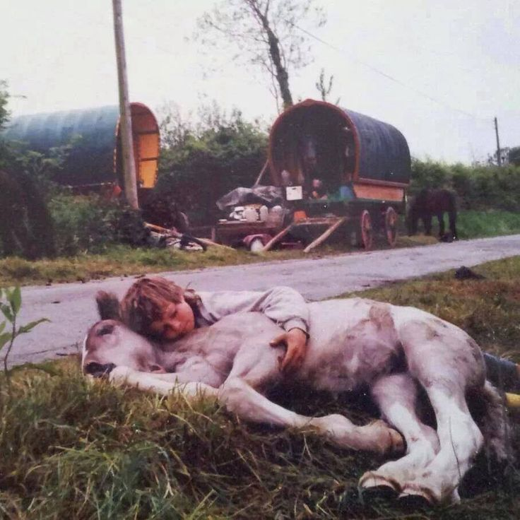 gypsy kid with his horse..heartwarming :)
