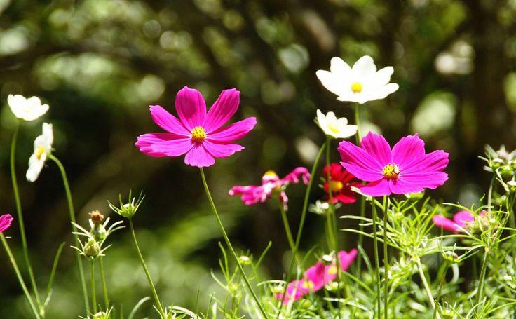 Free Of Lovely Flowers HD Wallpaper
