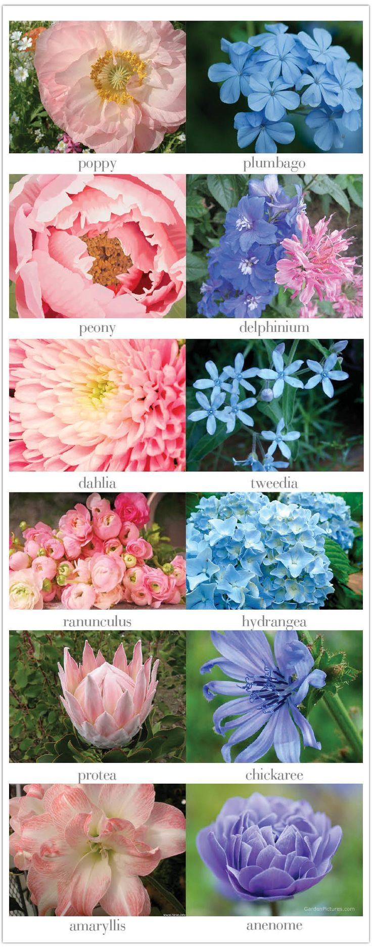 Pink flowers bring pops of cheer to any space. Learn about types of pink flowers and see pink flower images to help you find your perfect plant.