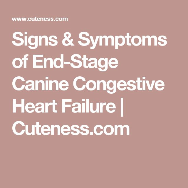 Signs & Symptoms of End-Stage Canine Congestive Heart Failure | Cuteness.com