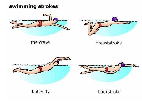 swimming strokes  english  pinterest  swimming diff