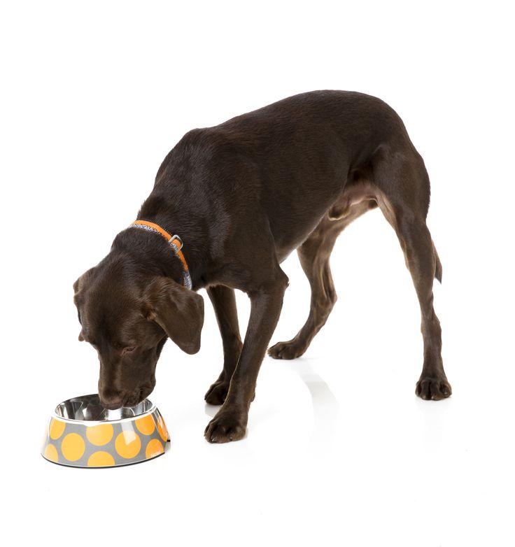 FuzzYard Bubbleicious Easy Feeder Pet Bowl -  Orange