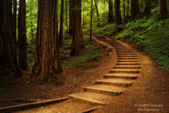 Muir Woods Steps Landscape Photograph Redwood Trees Nature Photography Winding Path Forest Staircase California National Monument Print Landscape Design Landscape Landscape Photographers