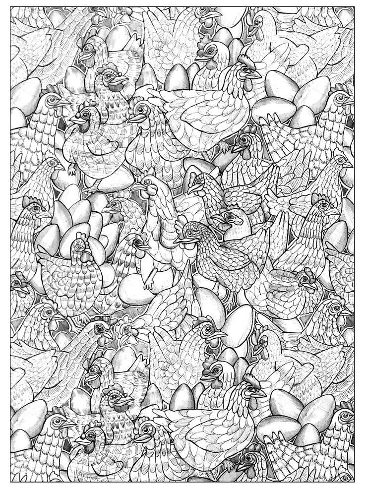 Free Coloring Page Adult Chicken 1 To Color They