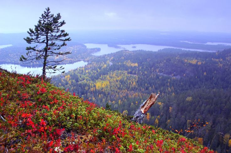 Autumn colours on Konttainen hill near Ruka in Kuusamo, Lapland, Finland.