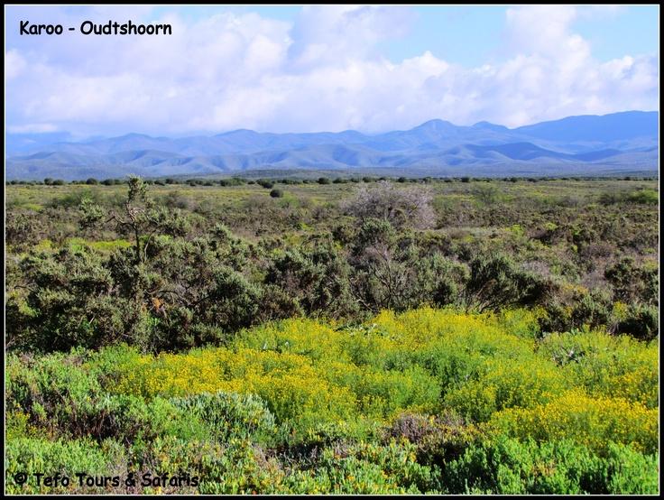 Oudtshoorn - Klein Karoo  Garden Route South Africa