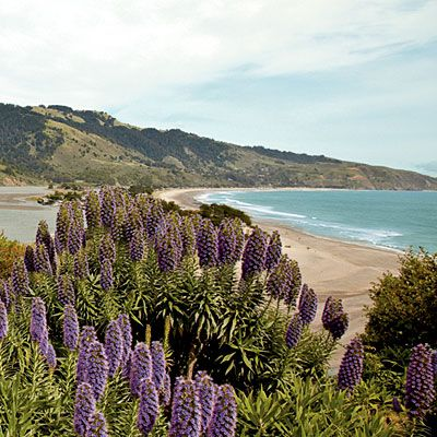 Bolinas, California. Head north from San Francisco to this bohemian paradise where artists and surfers enjoy an off-the-grid life. | Coastalliving.com