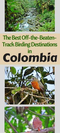 The best lesser-known birding and nature spots in Colombia!