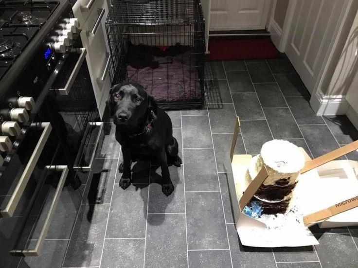 Cachorro devora bolo de casamento