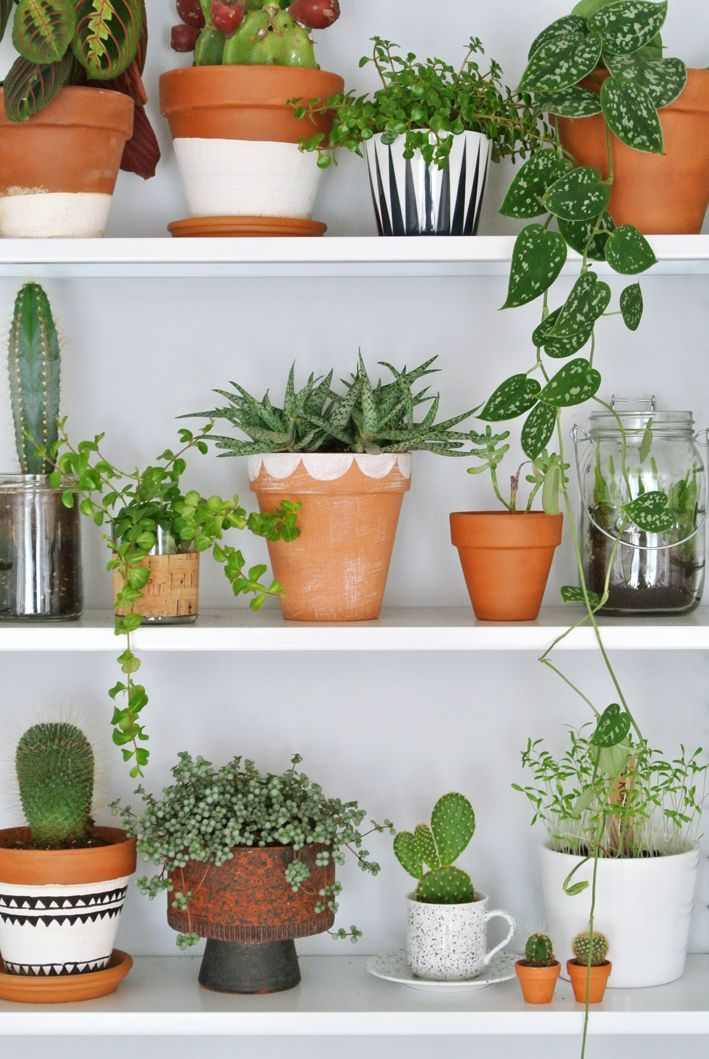 Gather plants of assorted shapes, sizes, and varieties on shelves for a fresh, indoor garden.