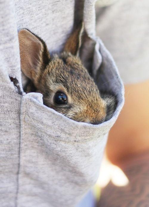 Hi. #bunny