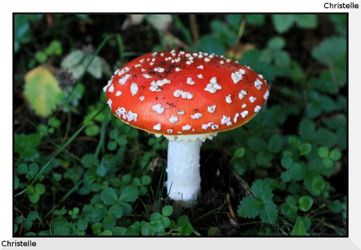 Karpenissi mushrooms (Greece)