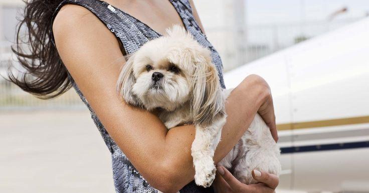Dosis de Imodium en perros. El Imodium se puede administrar en perros para el tratamiento de la diarrea siguiendo las dosis sugeridas ya sea en comprimidos o presentación líquida.