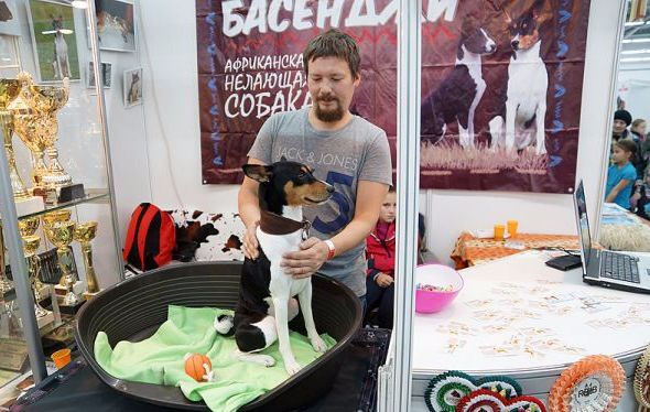 Всероссийская выставка собак-2016 в Перми.