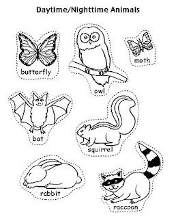 Nocturnal Animals Worksheets Clip Art Printables
