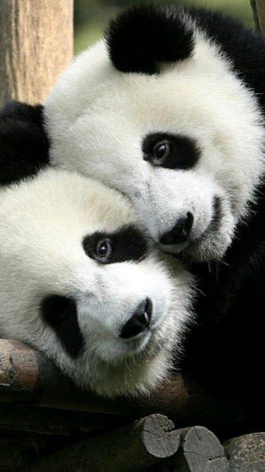 LOVE, LOVE, LOVE THESE PRECIOUS ANIMALS!!!!