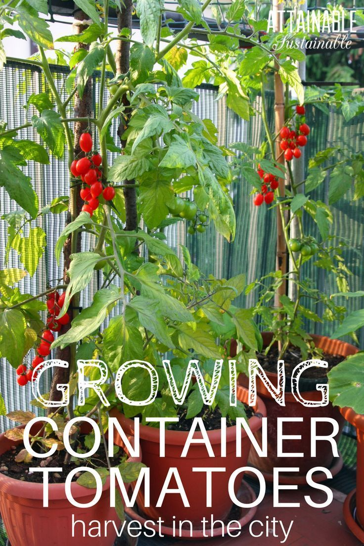 Growing Tomatoes In Grow Bags Or Containers Is A Great Way To Generate Crop Small Garden E Here The Best Plant Soil