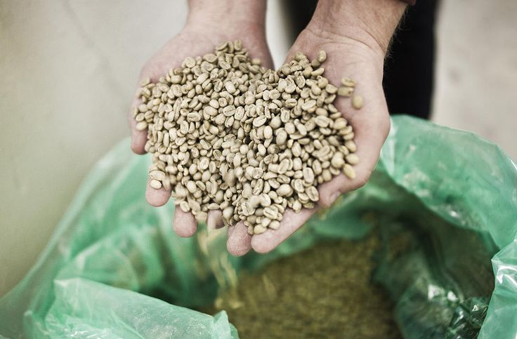 Green Coffee Beans - Nordic Roast - Jacobsen & Svart - Coffee Roastery - Trondheim - Norway