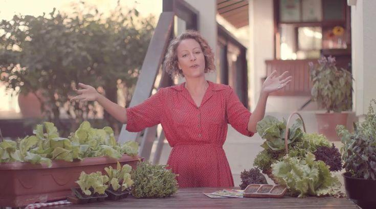 Como plantar hortaliças folhosas - #minhahorta 2ª Temporada - Episódio 2