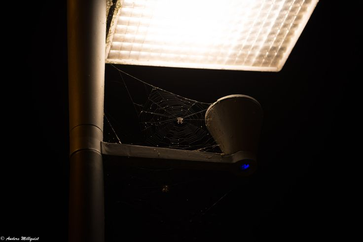 Itsy bitsy spider..... - https://millqvist.se/wp-content/uploads/D17_20170805-13_1228.jpg - https://millqvist.se/?p=800