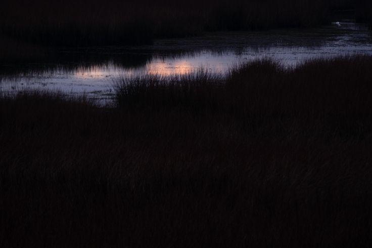 https://flic.kr/p/KhzMvA | amanecer | amanece en el humedal, una delgada línea de luz entre los juncos