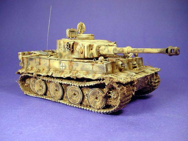 Tiger 1 Early from academy by Kelly Zak