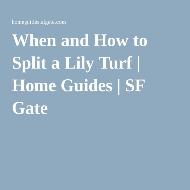 When and How to Split a Lily Turf | Home Guides | SF Gate