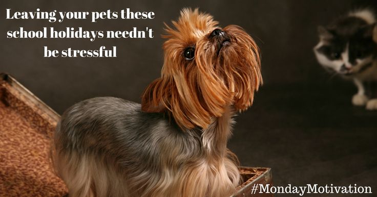 #Mondaymotivation Going away for school hols needn't be stressful #pets 10 important tips