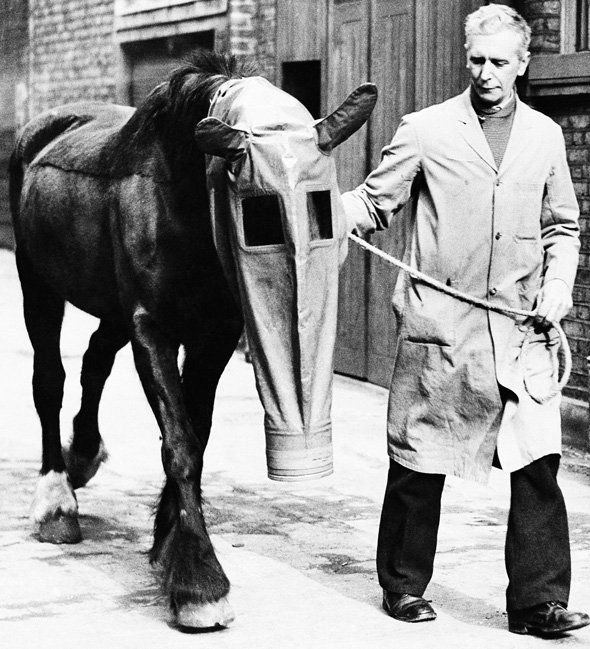 """Horse Gas Mask A docile horse wears a gas mask as a precaution against gas attacks, on March 27, 1940. It was developed by """"Our Dumb Friends League,"""" a humane society in London, England. (AP Photo"""