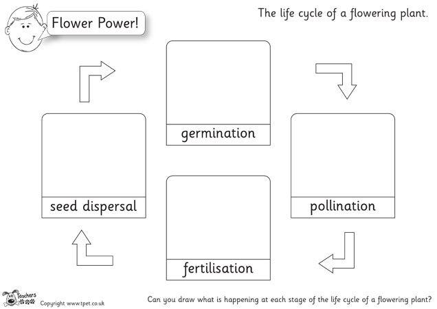 Teacher\'s Pet - Plant Cycle Drawings (b&w) - Premium Printable ...