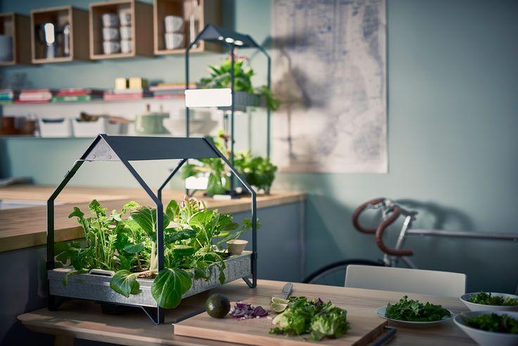 Звучи сложно, но съвсем не е така - хидропоника означава отглеждане на растения във вода без почва. С добавени вещества и правилната светлина хидропониката ти позволява да отглеждаш растения у дома дори през зимата. http://www.ikea.bg/indoor-gardening/growing-cultivators/growing-kits/60732/87402/