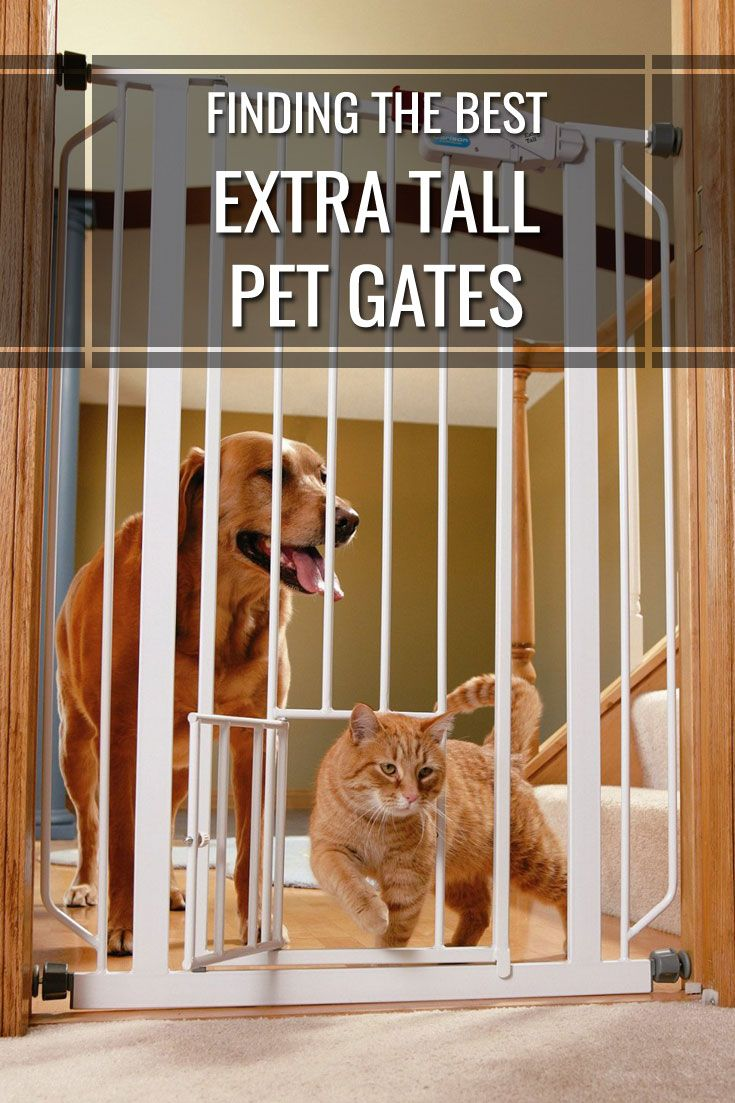 Finding The Best Tall Pet Gate For Your Home In 2016: Despite your best efforts pets can be very resourceful in getting around barriers that you set for them. Having a way to successfully coral your fur baby in your home can save you headaches and make sure your pet doesn't get into anything off-limits. An extra tall pet gate can be an extremely useful resource for keeping your pet out of trouble inside the house.