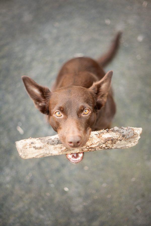 Toda la verdad se encuentra concentrada en los ojos de mi perro.