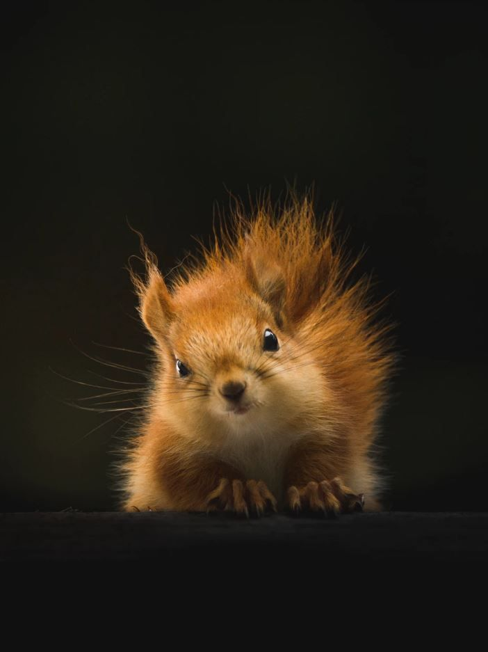 26 der süßesten Tiere der Welt   – Aྉnྉiྉmྉaྉlྉsྉ