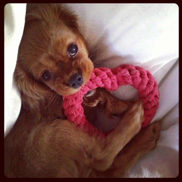 56 best images about valentine pets on pinterest happy - Valentine s day animal pics ...