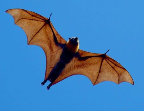 Another one of my fav animals: bat