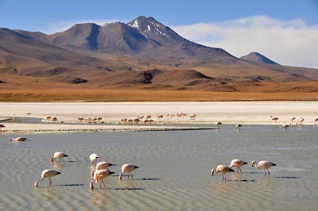 Bolivia's Salar de Uyuni - Margo Pfeiff, The Chronicle