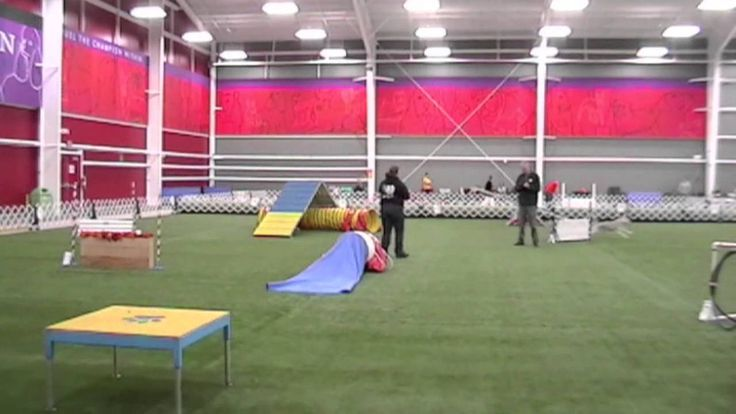 Shiva Goes Crazy - I *sob* with laughter every time I watch this Siberian Husky bitch run this agility course.  After 4 days of trialing, she has JUST FLAT HAD IT and is flipping off her handler, the judge, and the horse they rode in on.  LOL!  Funny when it happens to somebody ELSE 8*D