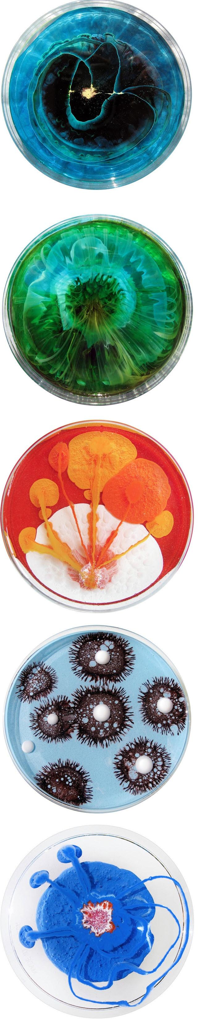 Klari Reis – Abstract paintings in Petri dishes