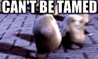 (doctor who,fat,funny,humor,dr who,meme,lol,dr. who,tennant,donna,donna noble,gif)
