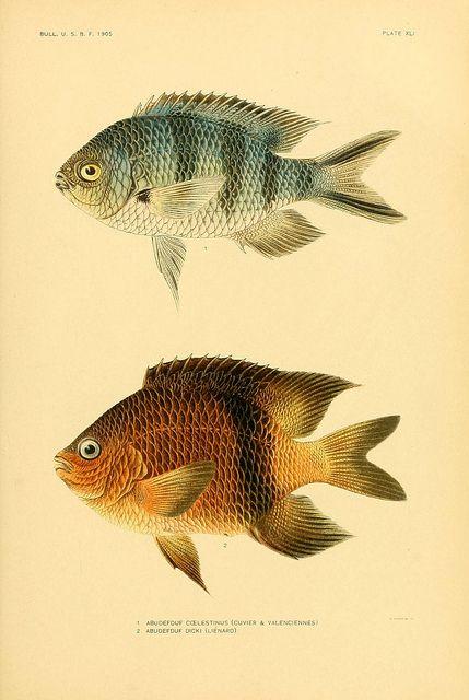 n312_w1150 | Flickr - Photo Sharing! #nature #fish #scientific #illustration