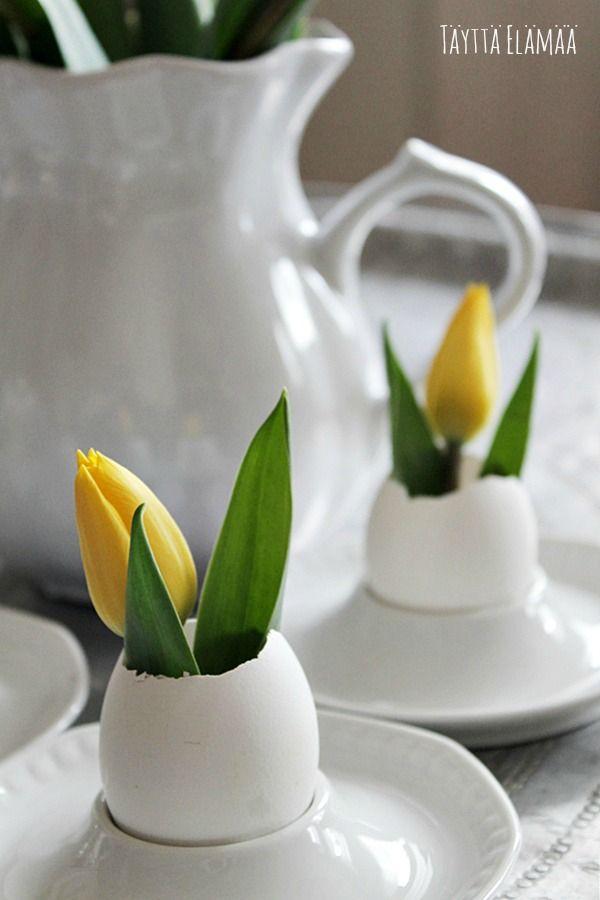 Tulips is eggs