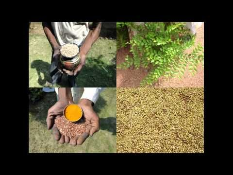 Medicinal Rice P5N Formulations for Sabal Excess: Pankaj Oudhia's Medici...
