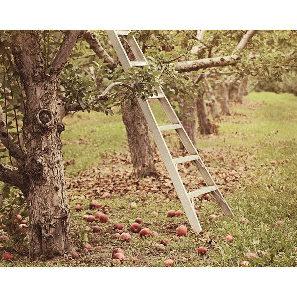 Apple Orchard photograph, Fall wall decor (409.140 IDR) ❤ liked on Polyvore featuring home, home decor, wall art, fall wall art, fall home decor, apple home decor, photo wall art and autumn home decor