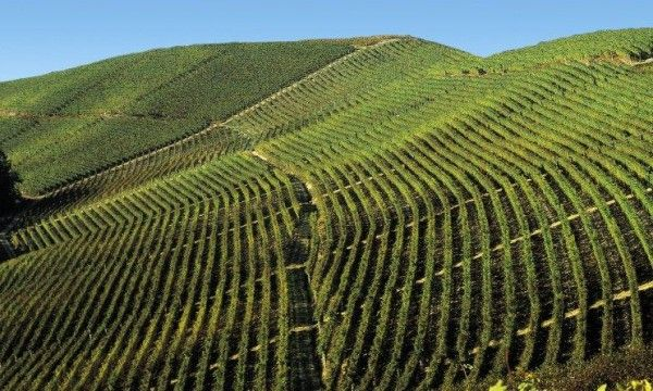 Fontanafredda-piedmont winery