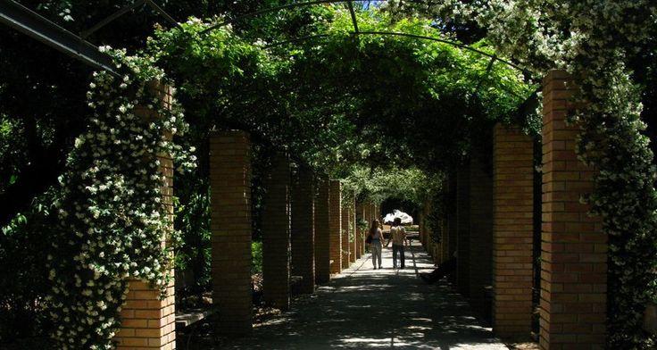 Κήποι και αυλές της Αθήνας